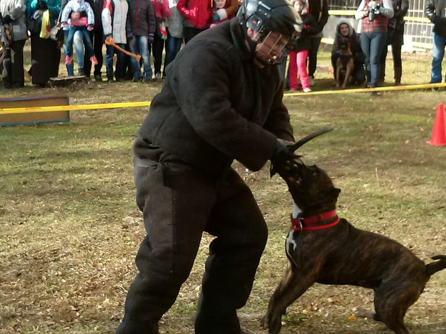 В центре Мариуполя собака спасала хозяина от двух вооруженных преступников (ФОТОФАКТ) (фото) - фото 3