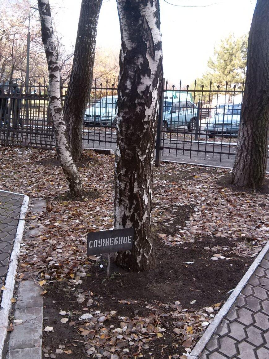 В Мариуполе появилось уникальное служебное дерево (ФОТОФАКТ) (фото) - фото 1