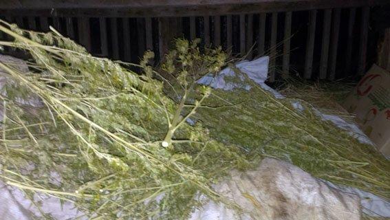 Более 2 кг каннабиса сотрудники полиции изъяли у жителя Артемовского района (фото) - фото 1