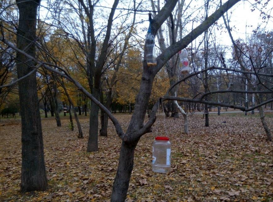130dd9751b6aa39bc1528693228d8646 Перестарались: В Одессе школьники закормили птиц перед зимой