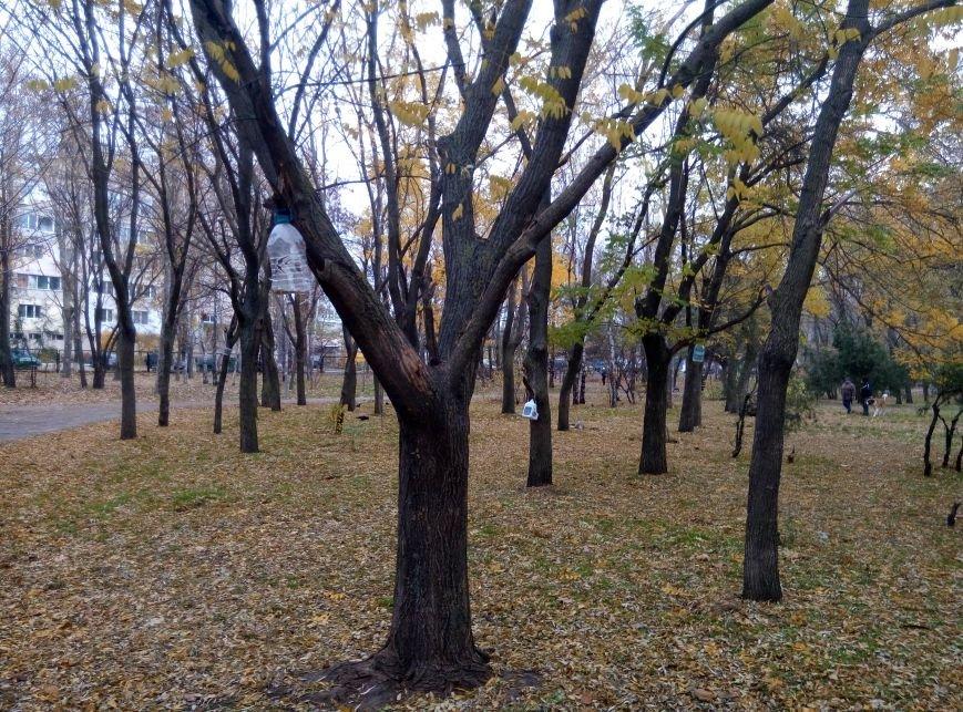 74aa8703032466262fa031b618fb3336 Перестарались: В Одессе школьники закормили птиц перед зимой