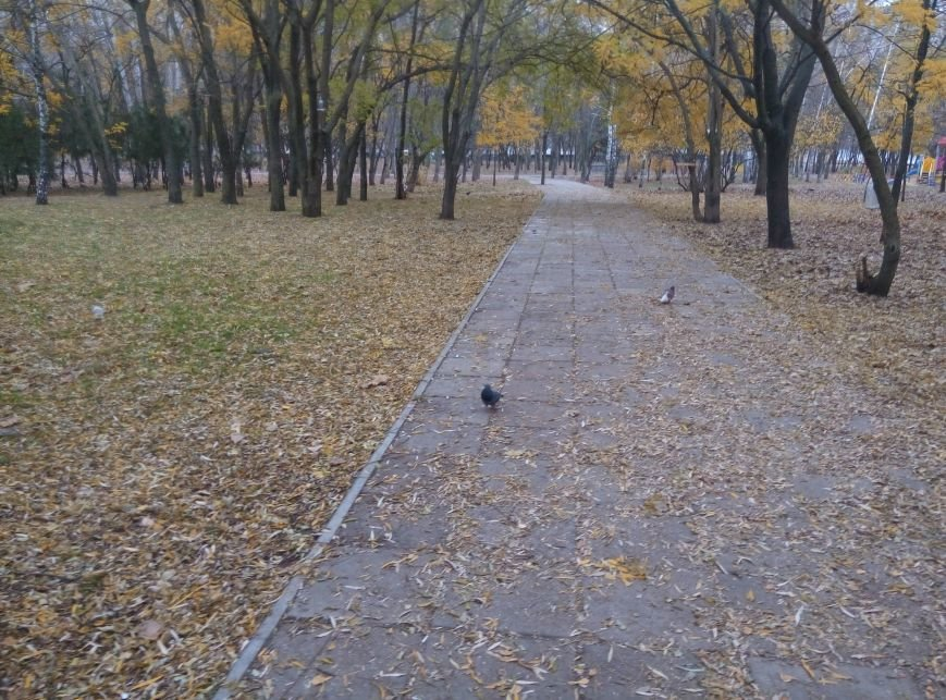 98309e2949786f4c1cf7d40a5b00e524 Перестарались: В Одессе школьники закормили птиц перед зимой
