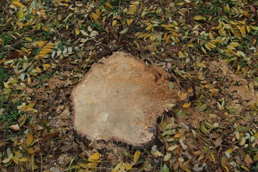 8e9d66a40ddb1bc7c3ed6eb20806bbe4 Расширение дороги? Вдоль одесской Трассы здоровья пять дней вырубывают деревья