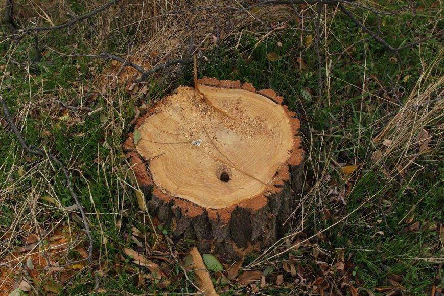 999e1c054b06a4b2210558266a342dba Расширение дороги? Вдоль одесской Трассы здоровья пять дней вырубывают деревья