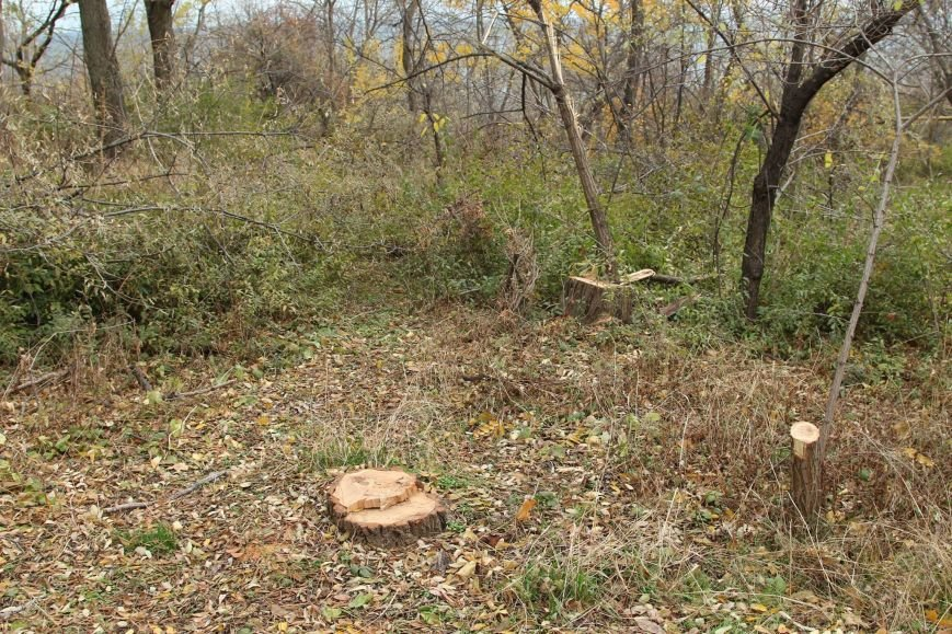 b1d838ed2b0053c439dc52a0bf7ac020 Расширение дороги? Вдоль одесской Трассы здоровья пять дней вырубывают деревья