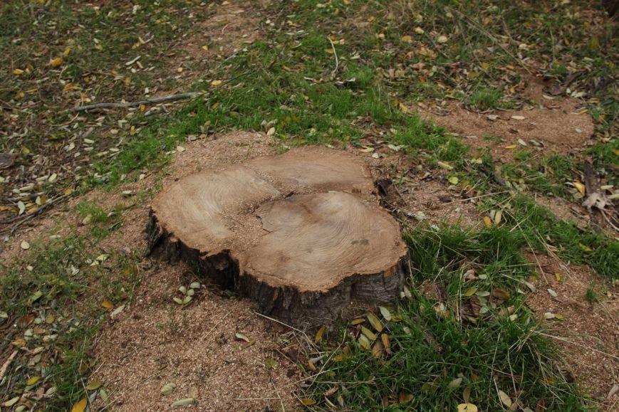 bcb738b92209d2277026b3f88e577b2a Расширение дороги? Вдоль одесской Трассы здоровья пять дней вырубывают деревья