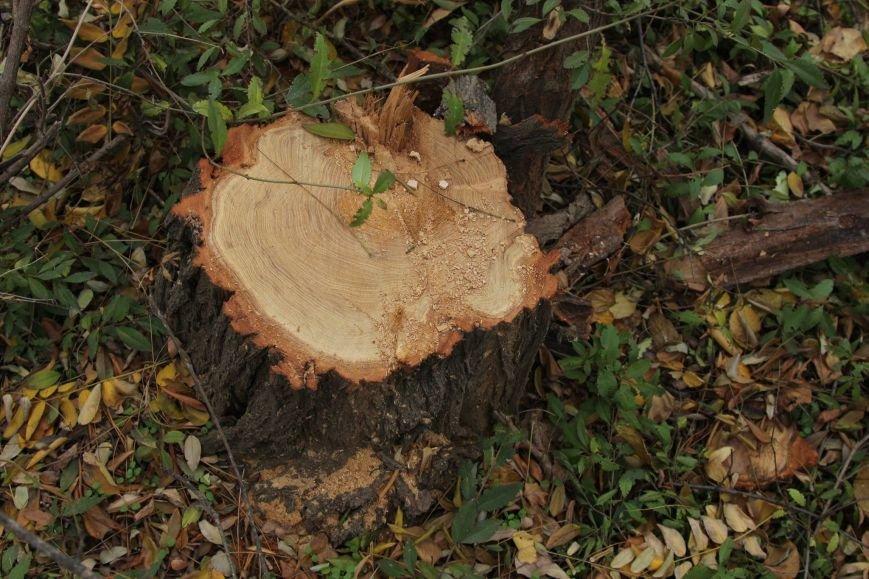 be1ee0d9126068eea4041ab0cda1a13a Расширение дороги? Вдоль одесской Трассы здоровья пять дней вырубывают деревья