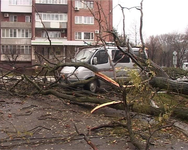 В Армавире из-за непогоды на автомобиль упало дерево (фото) - фото 1