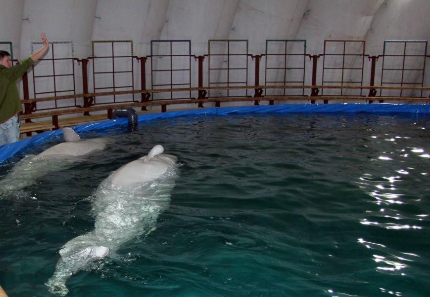 В Волгоград приехали дельфины : Одиссей и Делмер уже успели порадовать зрителя красочным шоу (фото) - фото 1
