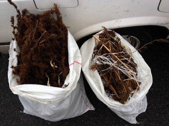 У жителя Кировоградской области изъято около 10 кг конопли (фото) - фото 1