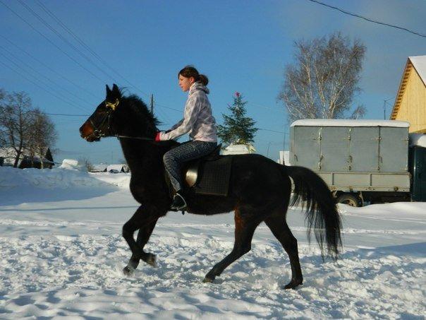 к лошадям-01