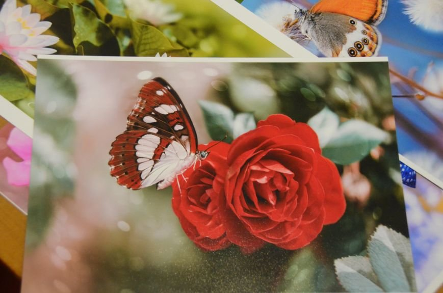 В галерее Никитского сада открыта новая выставка с «портретами» крымских бабочек, фото-2