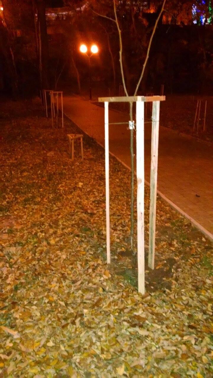 702816da6e91fbe0a91395dc8cc8499c Высадка деревьев на Аллее Небесной Сотни в Одессе: дело одно, интересы разные
