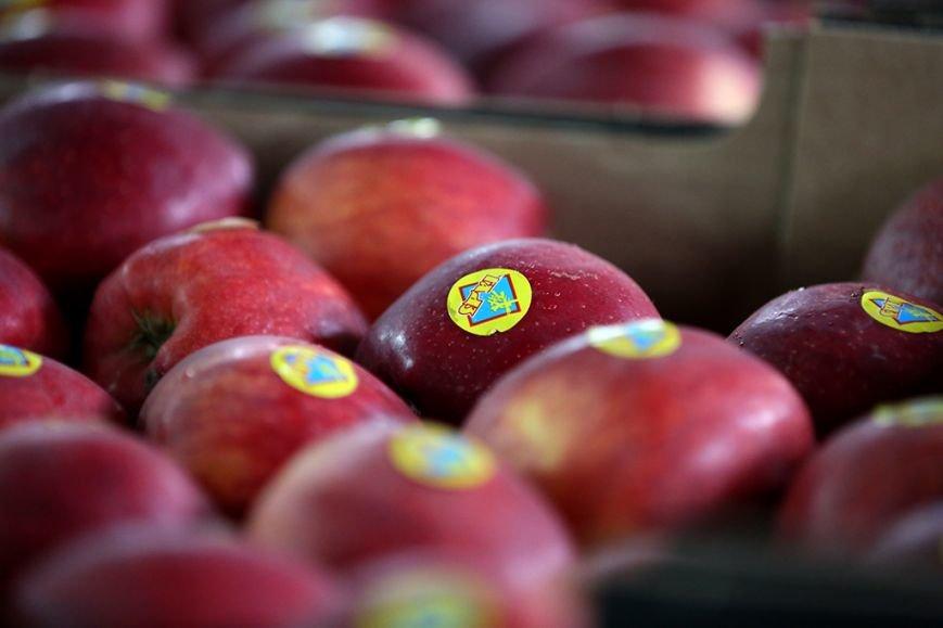 У Бучачі посол Канади відкрив грандіозний переробний комплекс та фруктосховище (фото) (фото) - фото 1