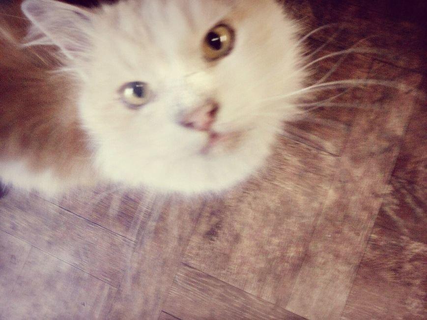 Днепропетровская собака Чара научилась открывать дверные замки, а кот Коте рисовать (ФОТО) (фото) - фото 2