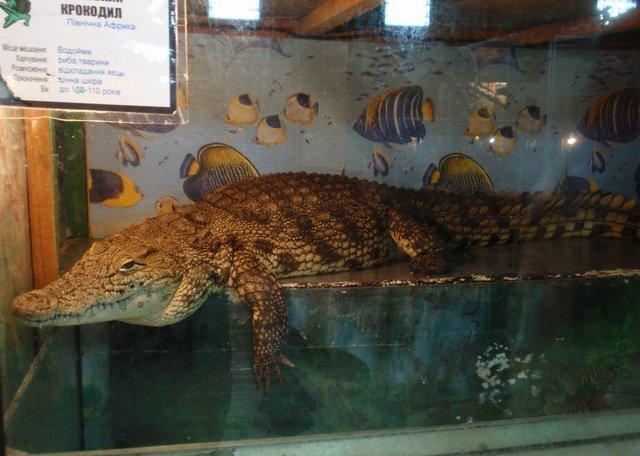 Крокодили, змії, сови та папуги тимчасово поселилися у Вінниці, фото-5