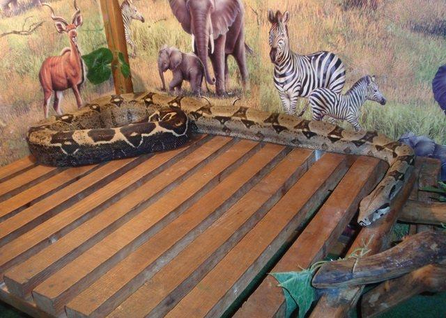 Крокодили, змії, сови та папуги тимчасово поселилися у Вінниці, фото-4