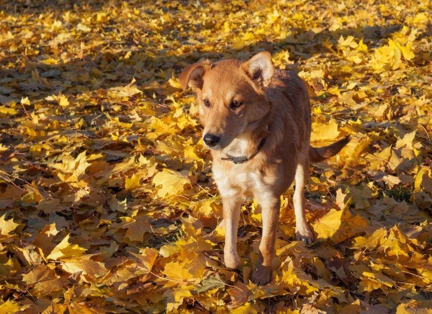 Красноармейское общество защиты животных очень просит помочь своим подопечным (фото) - фото 2