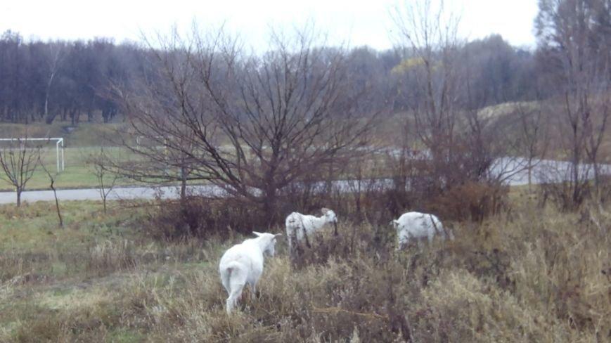 В Днепропетровском университете завели коз? (ФОТО), фото-1