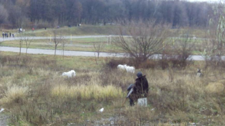 В Днепропетровском университете завели коз? (ФОТО) (фото) - фото 1