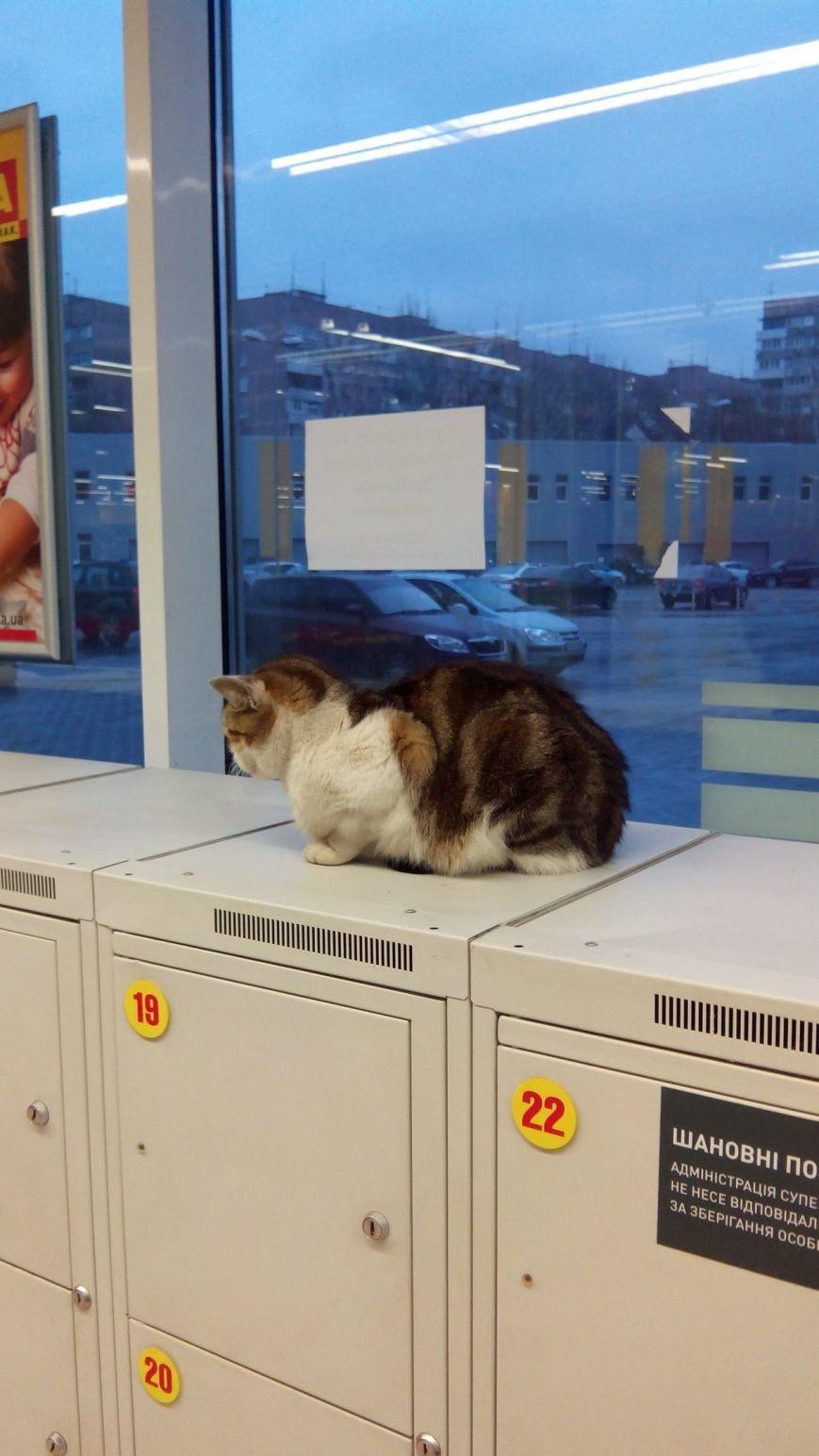 В Днепропетровском супермаркете кот работает охранником (фото) - фото 1