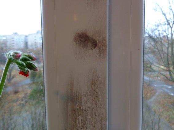 В мариупольской школе искали и извлекали невидимые следы рук (ФОТО) (фото) - фото 1
