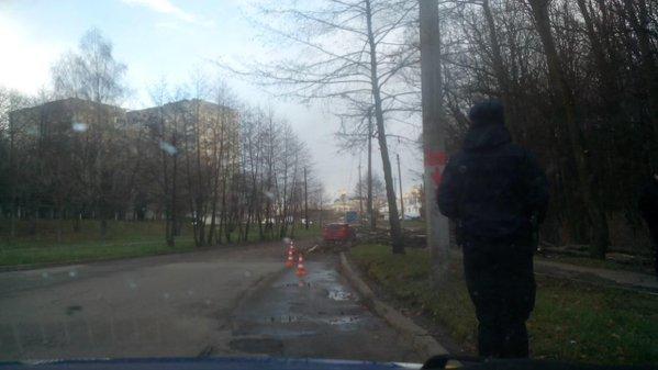На одній із вулиць Львова падаюче дерево обірвало лінії електропередач (ФОТО) (фото) - фото 1