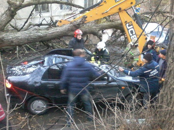 Натериторії психлікарні уЛьвові дерево впало надвох людей