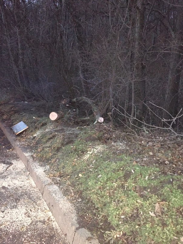 У Львові патрульні та небайдужі мешканці самотужки очистили дорогу від поваленого дерева (ФОТО) (фото) - фото 1