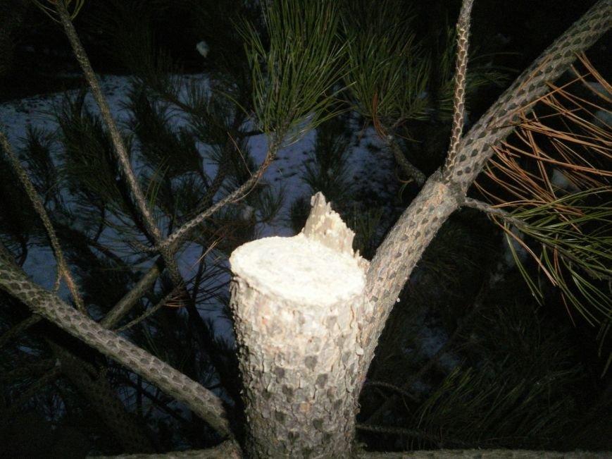 В Краматорском ландшафтном парке уничтожают молодые сосны (ФОТО), фото-6