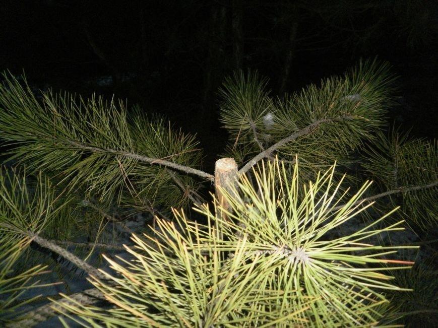 В Краматорском ландшафтном парке уничтожают молодые сосны (ФОТО), фото-5