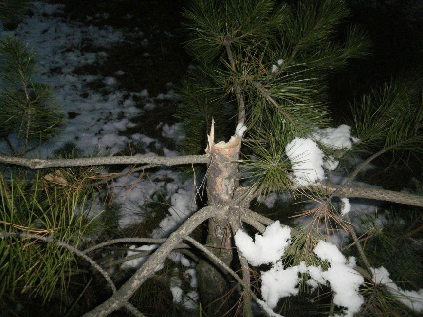 В Краматорском ландшафтном парке уничтожают молодые сосны (ФОТО), фото-4