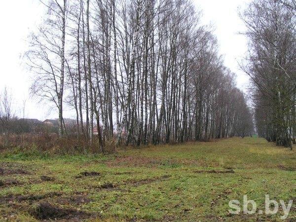 Вдоль дороги под Витебском незаконно вырубили деревья. Ущерб природе - более 100 млн рублей (фото) - фото 1