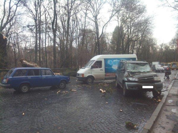 Дерево, яке впало на вулиці Стрийській, пошкодило автомобіль та спричинило затори (ФОТО) (фото) - фото 1