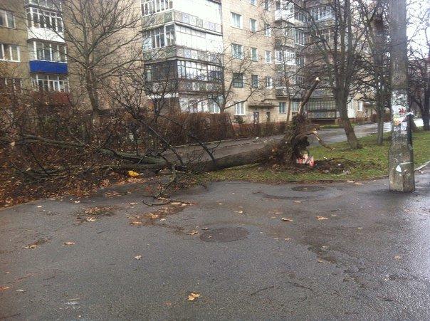 У Франківську сильний вітер повалив дерева (ФОТО) (фото) - фото 1