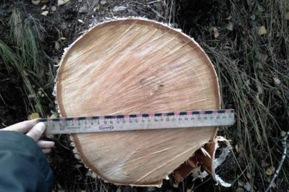 Краматорчанин организовал бизнес на незаконной вырубке леса (фото) - фото 2