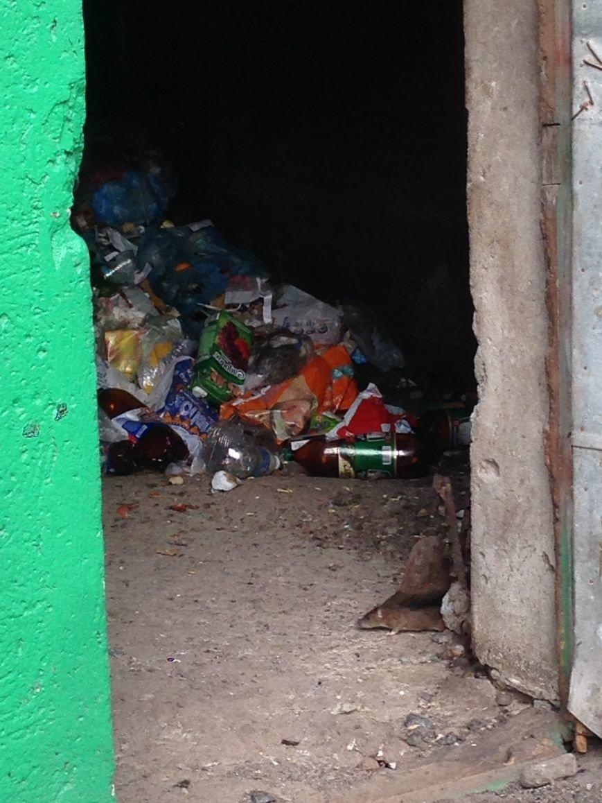 27936af097971c997c9455639c796e93 Такие милые и пушистые: в одесской многоэтажке крысы бегают по парадной и заглядывают в квартиры