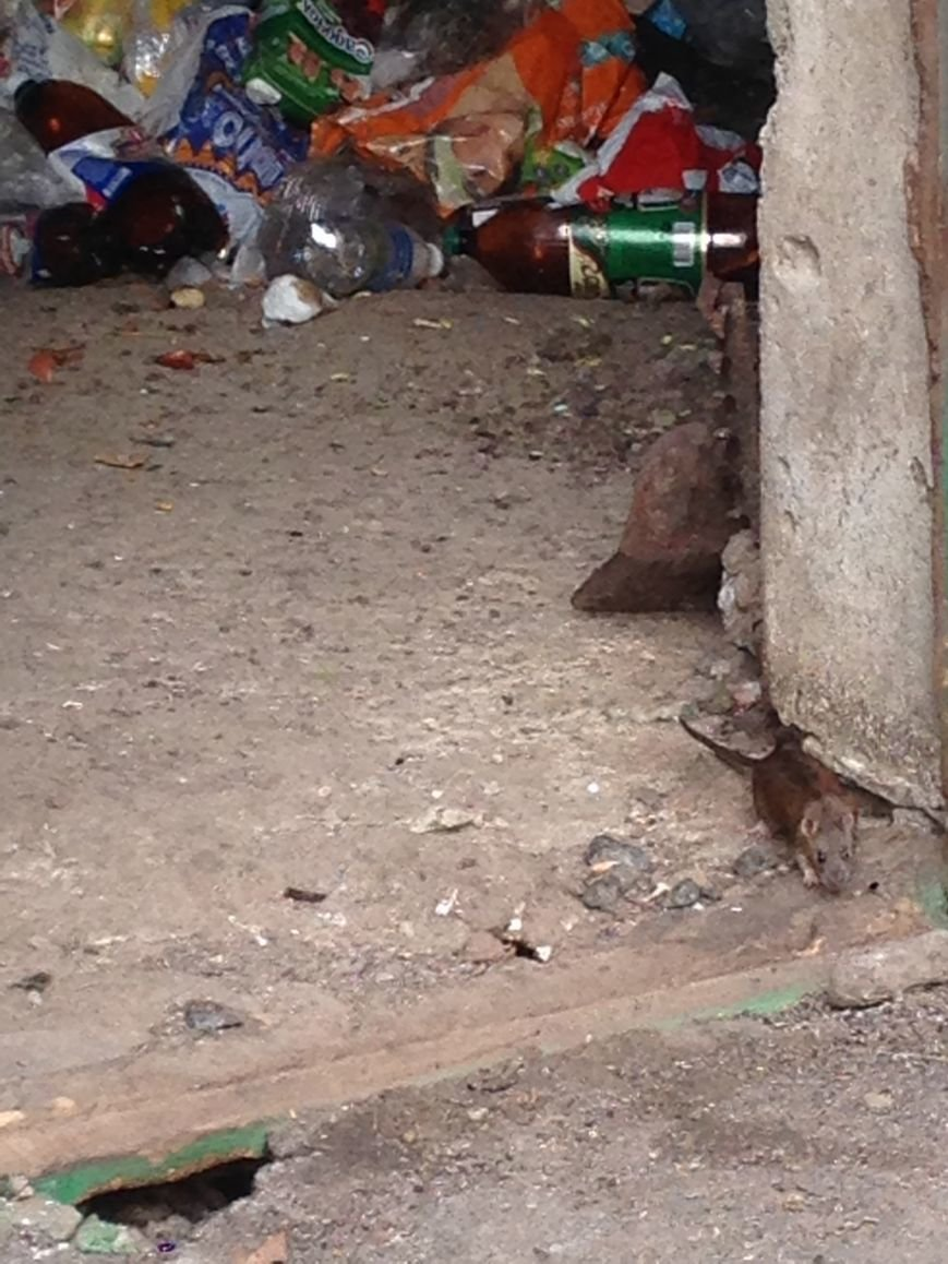 Такие милые и пушистые: В одесской многоэтажке крысы бегают по парадной и заглядывают в квартиры (ФОТО) (фото) - фото 1