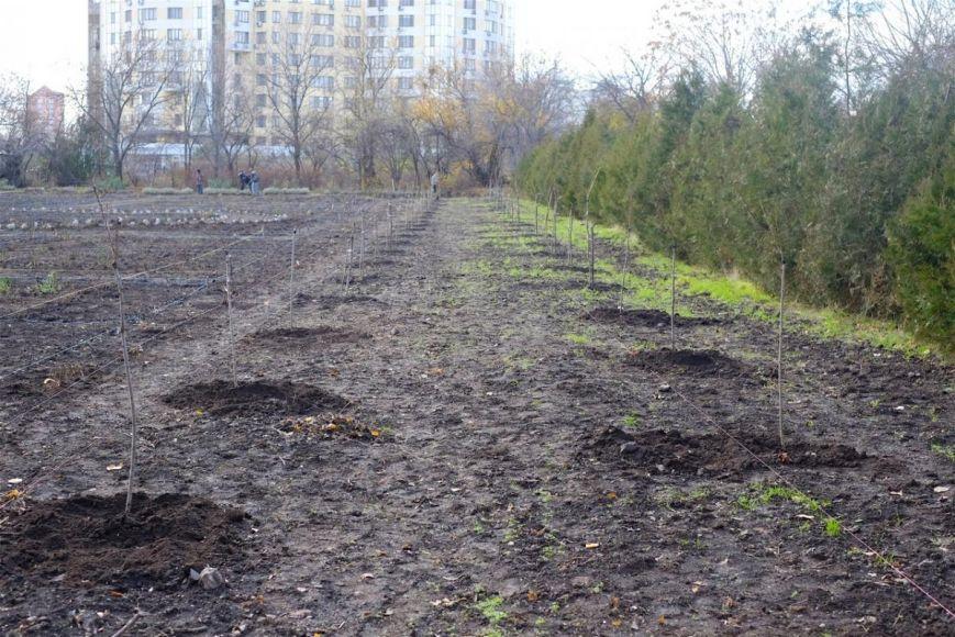 Райский сад: В Одессе появилась аллея сакуры (ФОТО) (фото) - фото 1