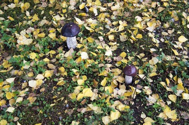 Зима в календаре, но чем запомнилась новополочанам госпожа Осень? (фото) - фото 8
