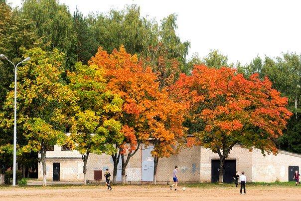 Зима в календаре, но чем запомнилась новополочанам госпожа Осень? (фото) - фото 6