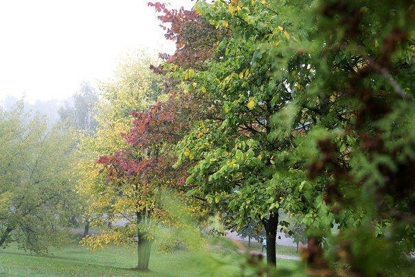 Зима в календаре, но чем запомнилась новополочанам госпожа Осень? (фото) - фото 5