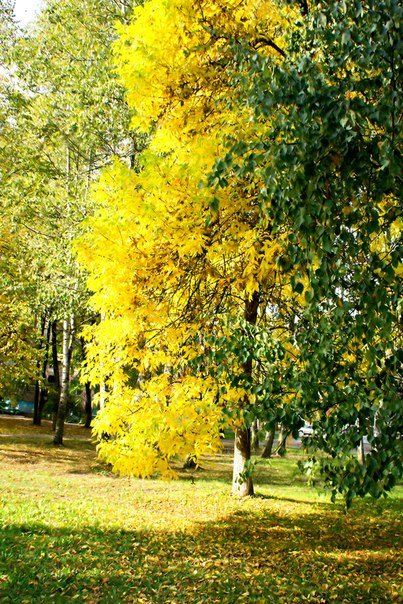 Зима в календаре, но чем запомнилась новополочанам госпожа Осень? (фото) - фото 9