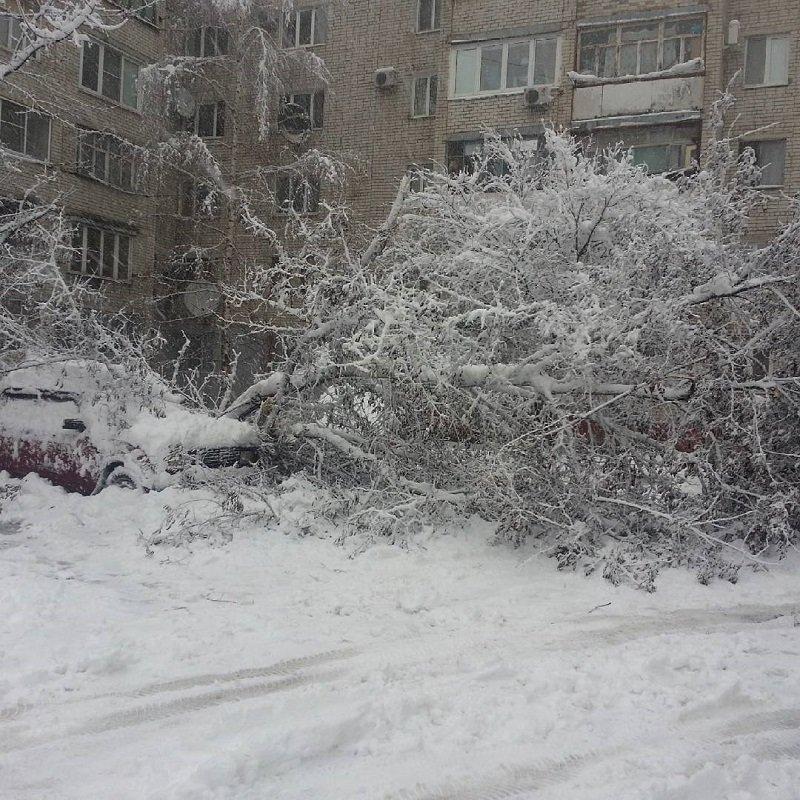 Вместе со снегопадом на Белгород обрушился «деревопад» (фото) - фото 1