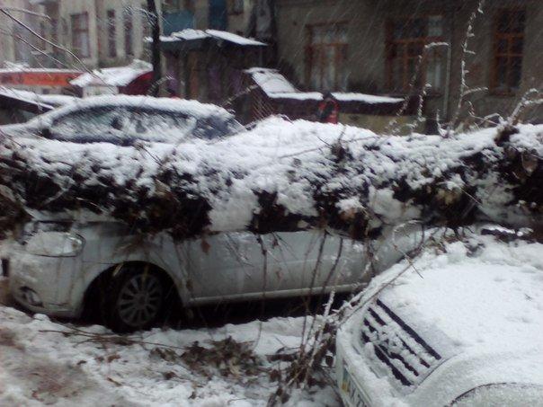 В Харькове машины «страдают» из-за снегопада: пробиты стекла и упавшие столбы портят автомобили горожан (фото) - фото 2