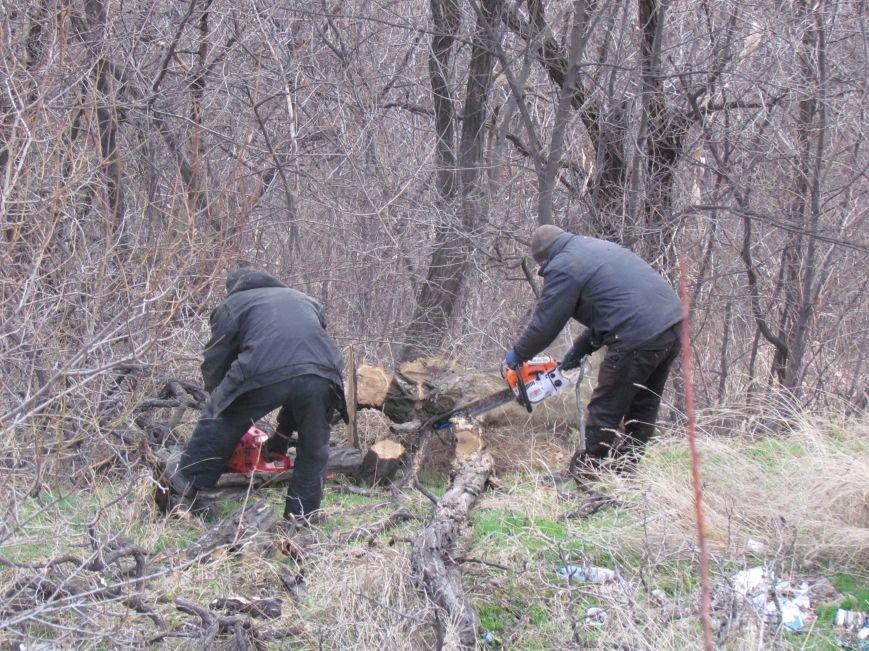 Бдительные горожане начали охоту на незаконных лесорубов в Мариуполе (ФОТО), фото-4