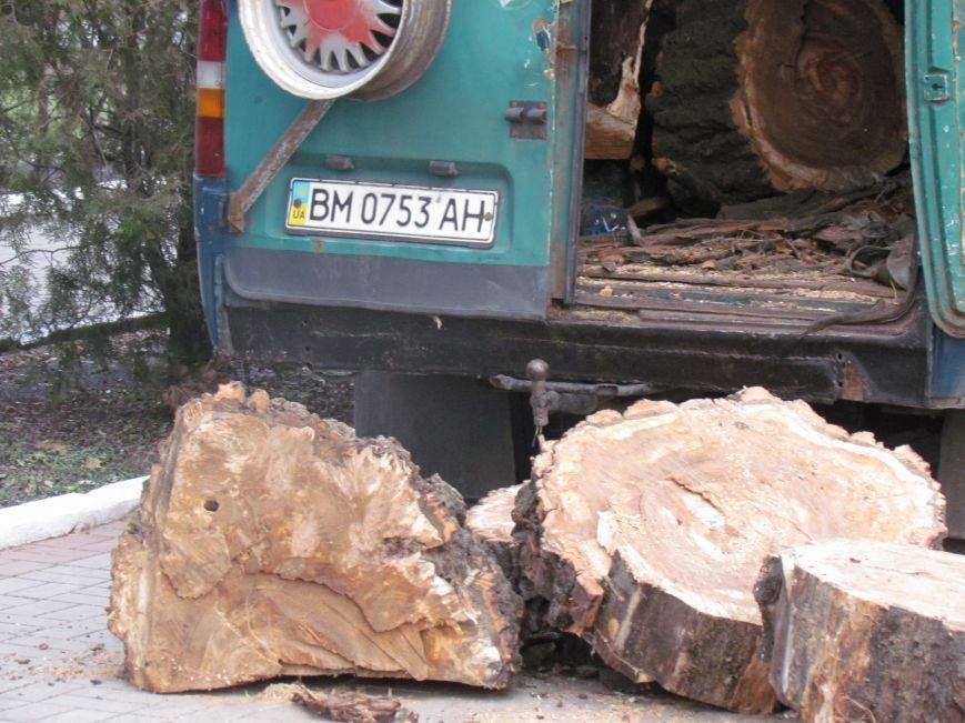 Бдительные горожане начали охоту на незаконных лесорубов в Мариуполе (ФОТО), фото-2