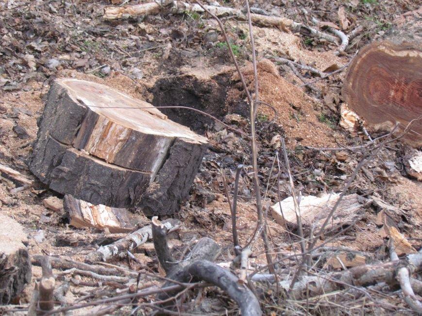 Бдительные горожане начали охоту на незаконных лесорубов в Мариуполе (ФОТО), фото-3