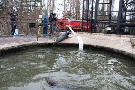 Крымские спасатели помогли обогреть животных из парка львов «Тайган» (ФОТО, ВИДЕО) (фото) - фото 6