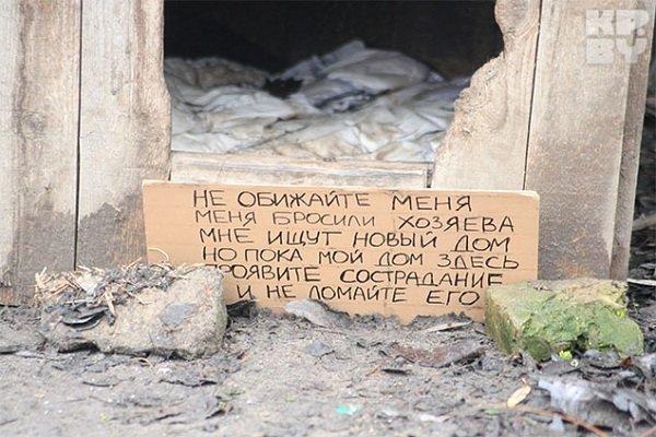 В Гродно на месте одного из снесенных домов на Татарской пес ждет своих хозяев уже больше месяца (фото) - фото 1